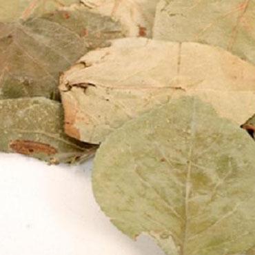 Ayva Yaprağı (500 Gr)