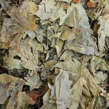 Çınar Yaprağı (100 Gr)