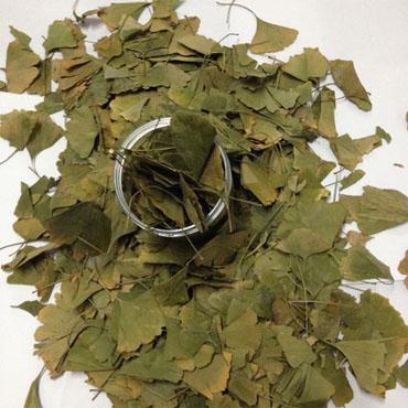 Ginkgo Biloba Yaprağı (100 Gr)
