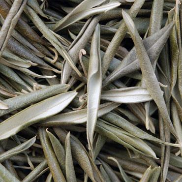 Zeytin Yaprağı (500 Gr)